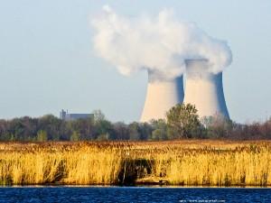 anemone-clown_1309854746-centrale-nucleaire-fessenheim