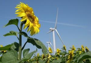 éolien-renouvelables-rentabilité