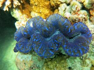 Mollusque_ photovolataique