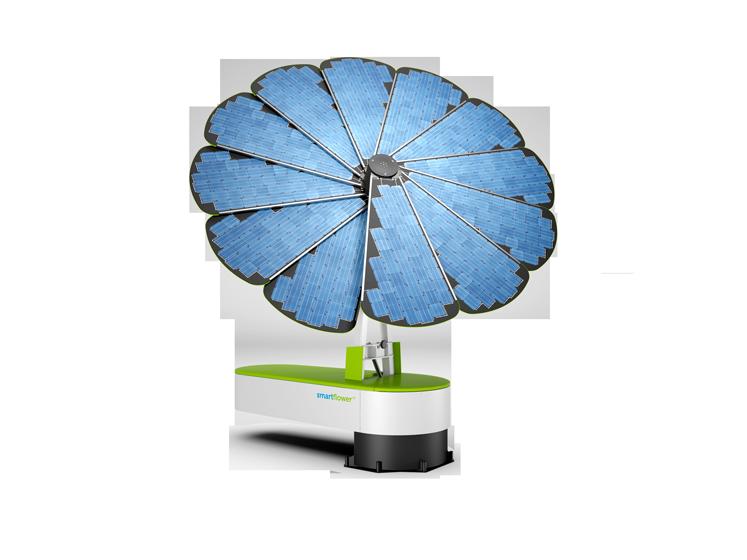 Planter Un Tournesol Photovolta 239 Que L Energeek
