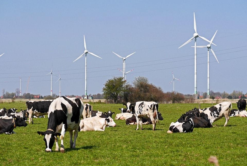 Une industrie laitière bas carbone