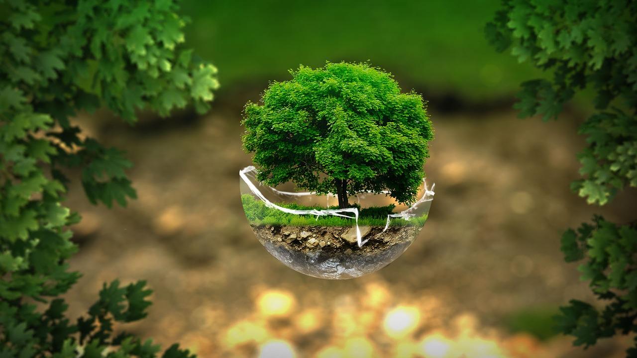 ecologie sociale claire monod