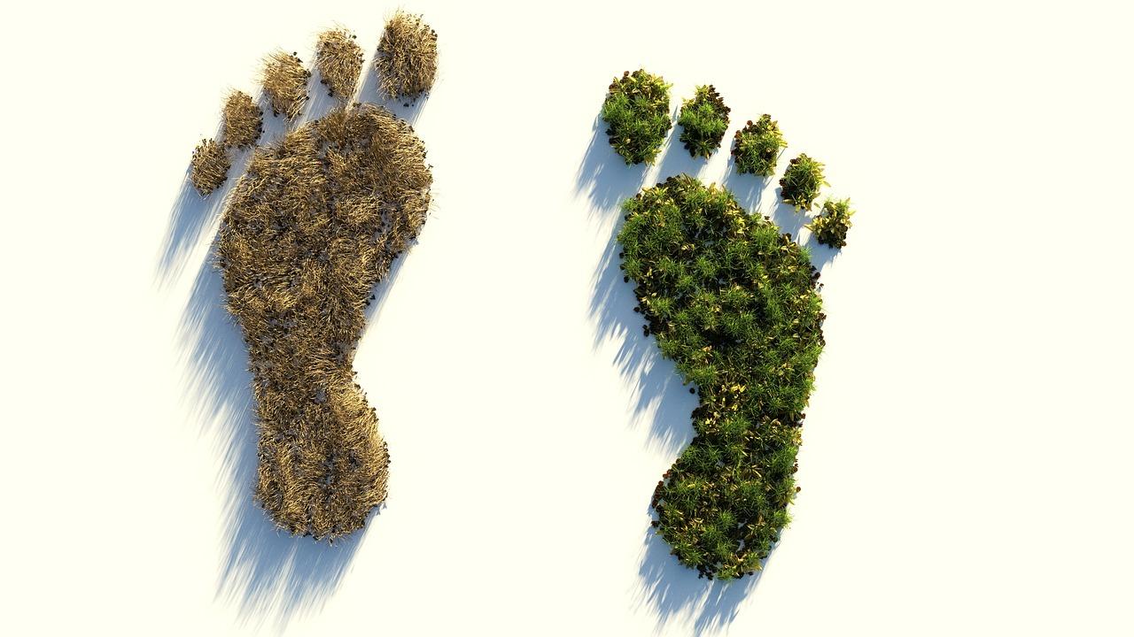 nouvelle zelande loi neutralite carbone 2050 - L'Energeek