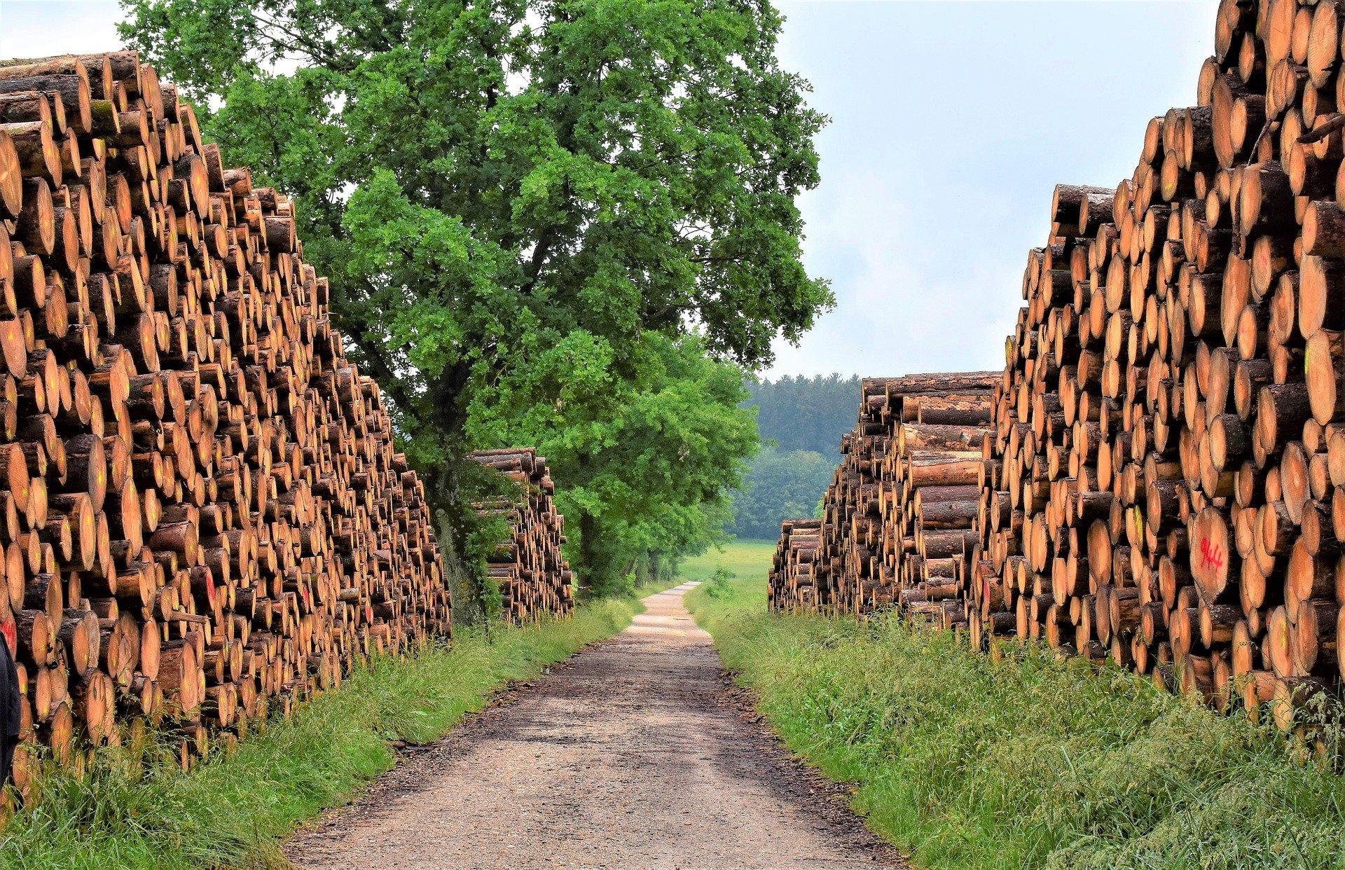 biomasse energie union europeenne surestime capacites 2050 - L'Energeek